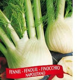 Berton Seeds - Vegetable Fennel Napoletano